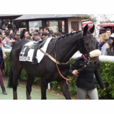 LUKY D'ANJOU, a courageous little horse!
