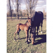 1st foal to be born…