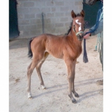 2nd foal …for our breeding operation