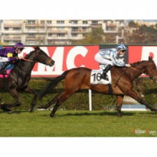"First ""quinté"" (big handicap) for PALMERINO"