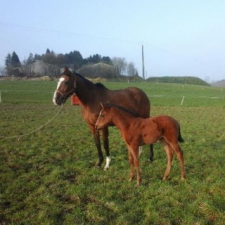 Expected foal…