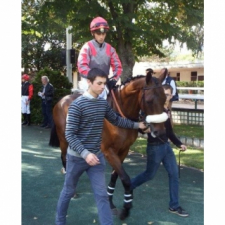 BOURGUEIL…a courageous horse