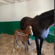 First foal…
