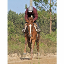 In total partnership with her amateur rider